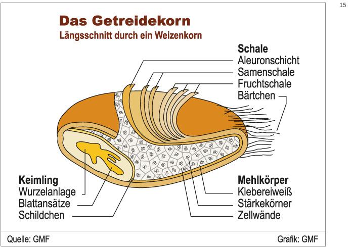 http://www.gfaller-mehl.de/sites/default/files/gmf_grafik_15-getreidekorn.jpg